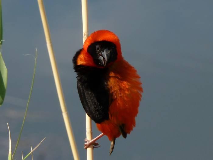 Pájaro (Foto: Iñigo Mujika)